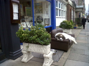 dog in Marylebone